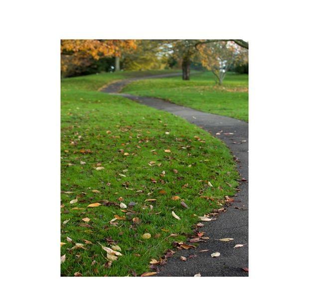 芬芳追逐凋謝的沿途,路長且空曠,每個腳印都喚醒了。(123RF)