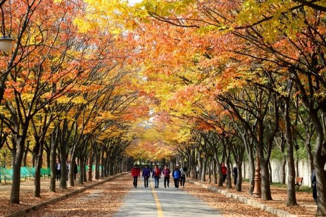 仁川大公園。(韓國觀光公社提供)