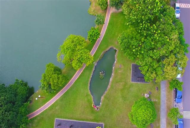 中興大學中興湖畔的「台灣池塘」已存在44年,正是中興EMBA立足台灣、放眼全球的最佳寫照。(中興大學提供)