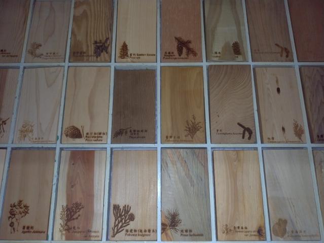 針葉木材常是重要商用木材,但是能夠鑑別的特徵很少