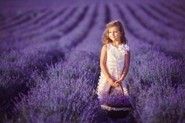 農夫在無邊無垠的紫色花田裡收割著薰衣草。(Fotolia)