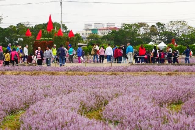桃園仙草花節紫在楊梅--邀請全民共同來賞花。