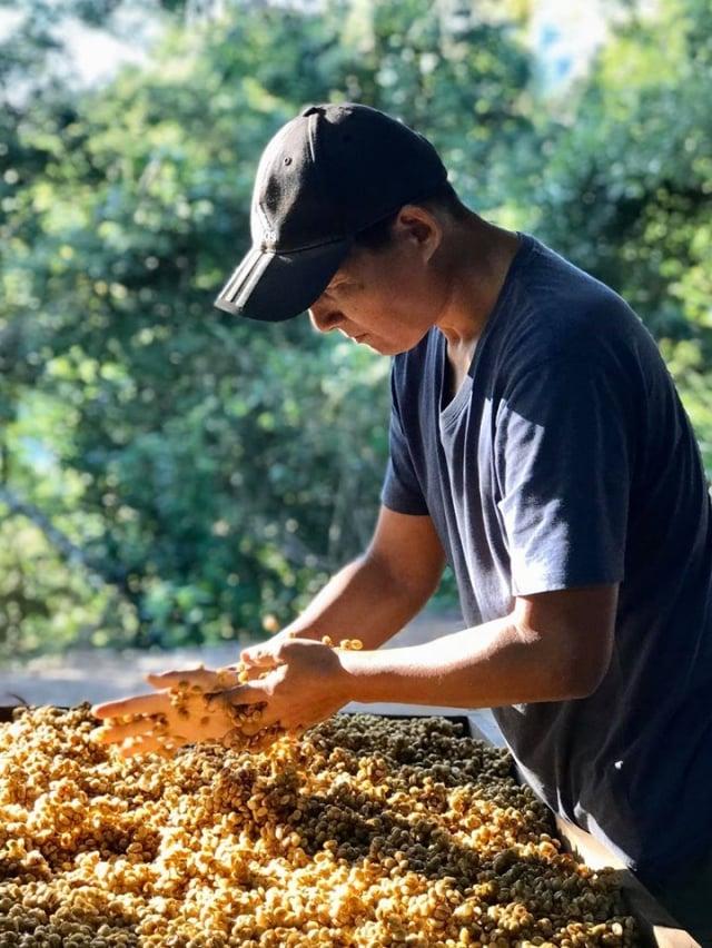 莊園主人吳振宏,正在翻攪蜜處理的咖啡。(業者提供)