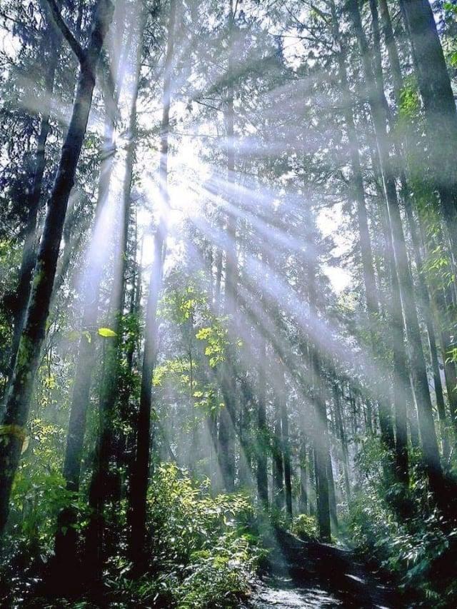 咖啡園就隱身在純淨的原始森林中。(業者提供)