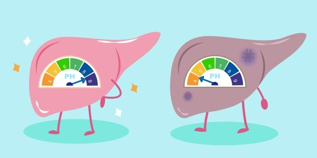 非侵入性肝硬度測量,將是未來臨床和研究評估肝纖維化的重要選項。(123RF)