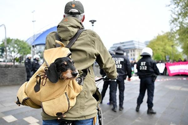 狗背包讓飼主可以帶寵物上山下海,完成帶著牠們四處旅行的夢想。圖為德國科隆街道上,使用狗背包的自行車騎士。(Getty Images)