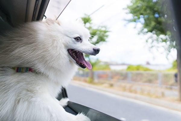 狗背包比寵物龍更好攜帶,在旅程中,寵物也很安全舒適。本圖為示意圖,與狗背包無關。(Getty Images)