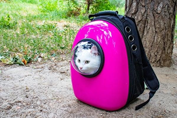 旅行背包款的狗背包,造型就像一般的旅行背包。圖為有太空艙般「透明的窗戶」設計的狗背包。(Shutterstock)