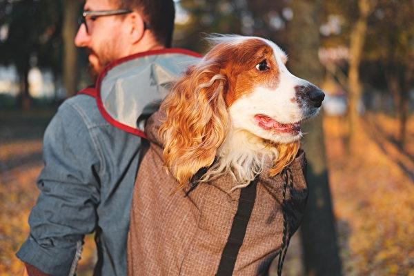 登山背包款的狗背包,頂部通常會設計一個可以讓寵物探出頭來的開口。(shutterstock)