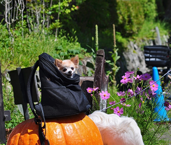 挑選狗背包時,要衡量有沒有足夠的收納空間,讓你攜帶隨身物品。(Shutterstock))