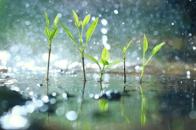 春耕、夏耘、秋收、冬藏,處處皆玄機與智慧,農事如是,人生亦如是。(shutterstock)