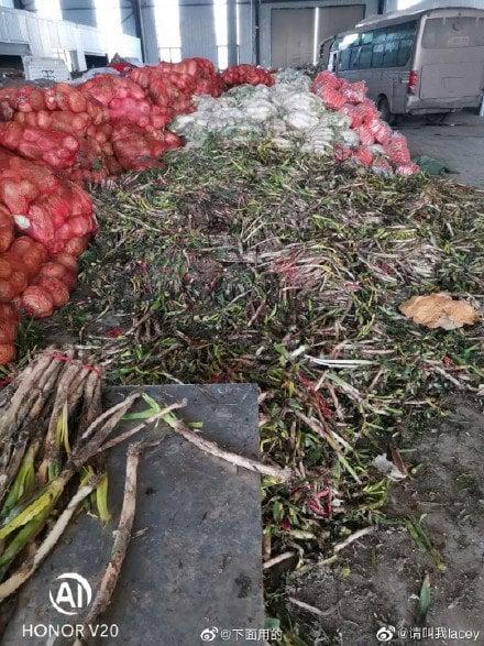 貴州捐助給湖北鄂州的大批蔬菜,被發現在倉庫裡放到爛掉。(網路圖片)