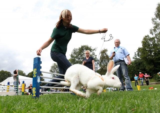 兔子除了外型可愛外,也很聰明,需要飼主較多的照料和愛心。圖為德國舉辦的寵物兔運動會。(Getty Images)