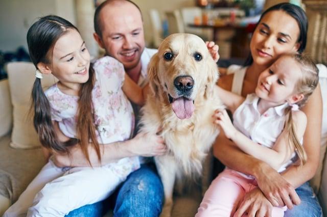 狗能跟人發展出親密的關係,而且狗的活動量大,可以在戶外陪伴孩子。(shutterstock)