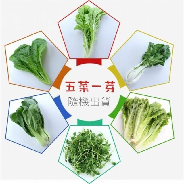 本次推出蔬菜箱內容物以有機蔬菜為主,含5葉菜類及1芽菜類。