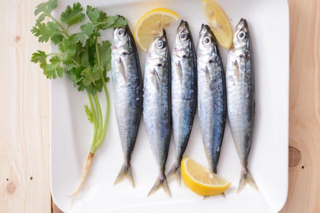 DHA在青花魚、沙丁魚、秋刀魚等青背魚中含量最豐富。 (Fotolia)