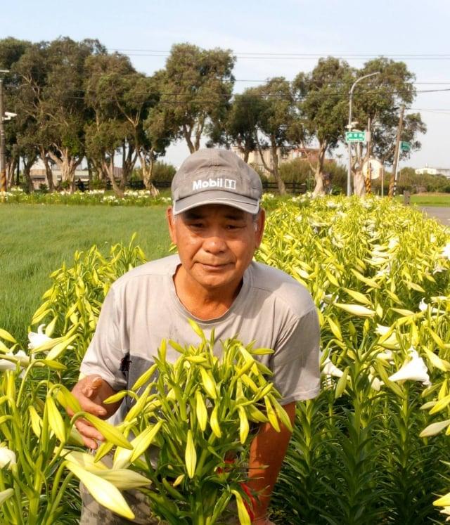 百合花達人李萬益展示一株百合結了「51朵」的花苞,堪稱「百合花王」。(桃園鄉土藝術家林新來提供)