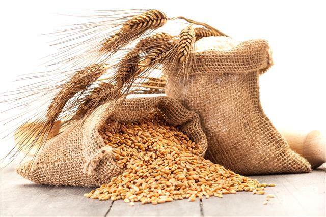大麥因為富含β-葡聚醣,對於降低膽固醇、提升免疫力等有顯著的效用。(123RF)