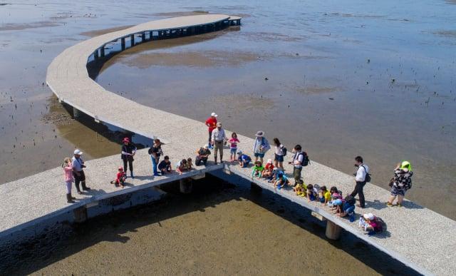 香山溼地每年5月到9月是招潮蟹最活耀的季節。( 竹市府提供)