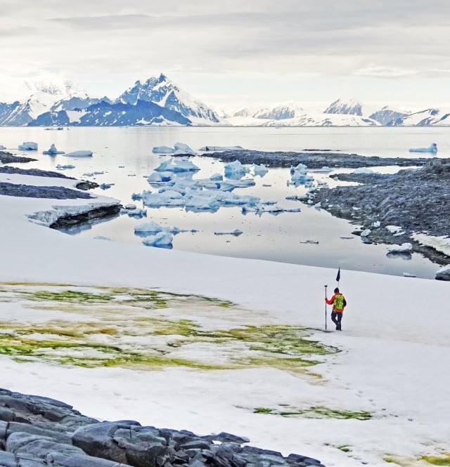 英國科學家指出,受全球暖化影響,南極的綠色藻類迅速增生,在雪地上形成一片綠色。(Cambridge University)