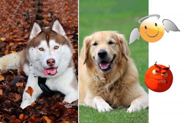 狗狗能分辨出好人和壞人嗎?(Pikrepo)