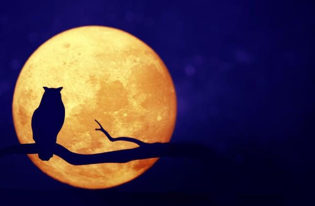 此時突然醒悟,暗夜的我異常精神抖擻,會不會是跟月圓有關?就像此地討海人的作息是跟隨著潮汐而變化!(123RF)