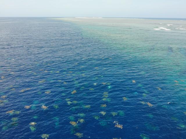 澳洲科學家藉由空拍機在大堡礁拍到數以萬計的綠蠵龜。(Great Barrier Reef Foundation and Queensland Government)