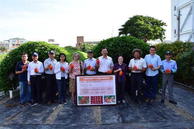 國內第一個命名的原生種木虌果「臺東1號」通過命名。(臺東農改場提供)