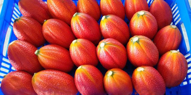 木虌果臺東1號果形端正,果實橙紅亮眼。