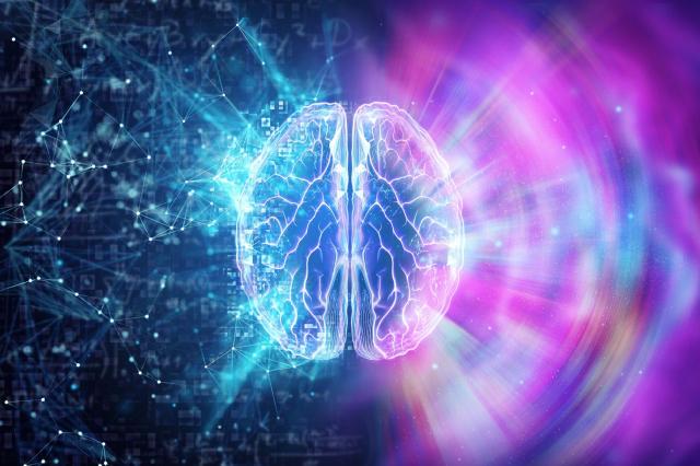 大腦主要由三種物質構成:灰質、白質和腦脊液。研究顯示,被人稱為「夜貓子」那種晚睡晚起的人,腦灰質可能更多一些。(灰質)體積的減小與同情心、認同性和隨和度相關。(ShutterStock)