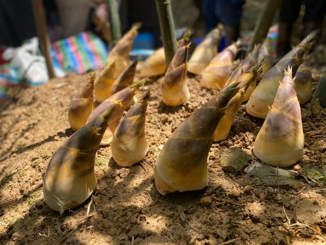 綠竹筍肉質鮮甜、口感佳、產量稀少所以價格高。(攝影/記者林紫馨)