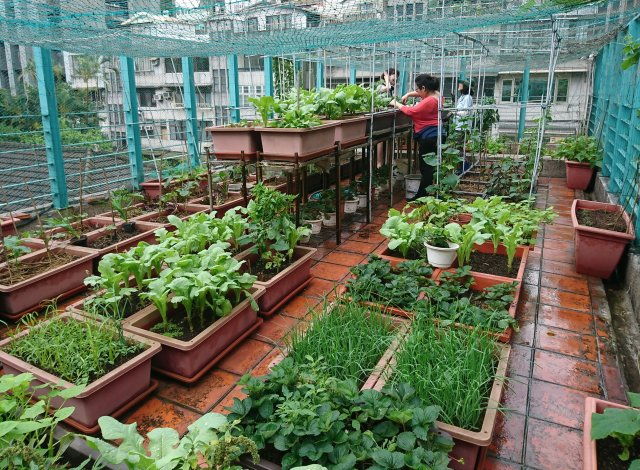 屋頂快樂農園是個交流情誼的好場域。(特生中心提供,攝影:沈秀雀)