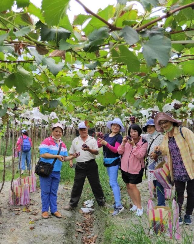 到黑松農場來採果的觀光客,在葡萄藤架下開心地合影。(游益裕提供)