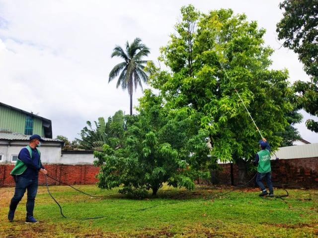 屏東縣政府為守護勝利星村多樣化且繁密的老樹,定期進行老樹健檢與養護。(屏東縣府文化處提供)