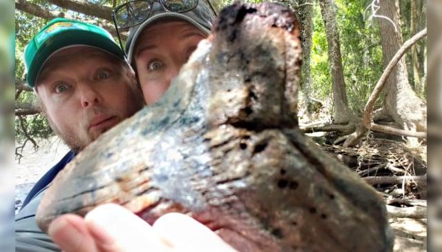 近日,有對夫妻在南卡羅萊納州發現了一顆巨齒鯊牙齒的化石。(Jessica Rose-Standafer Owens提供)