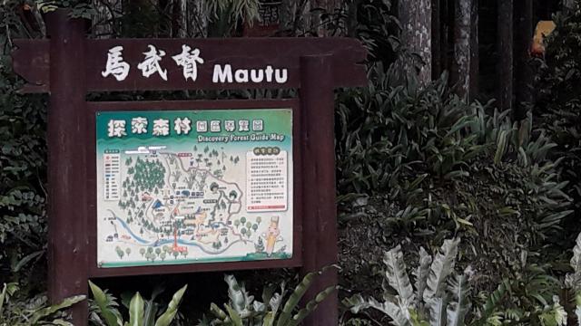 馬武督探索森林入口(攝影/王知涵)