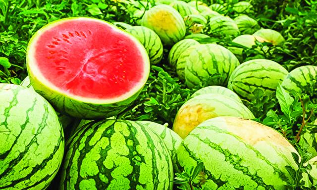 西瓜含有大量茄紅素,瓤越紅的西瓜,茄紅素越多。夏天晚上吃西瓜,容易加重身體寒溼之氣,半夜易出現嘔吐、腹瀉的現象。(Shutterstock)