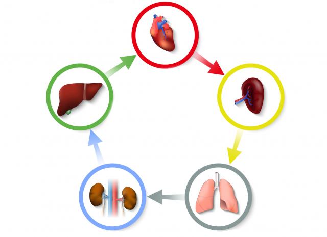 中醫認為:「春養肝,夏養心,秋養肺,冬養腎。」(Fotolia)
