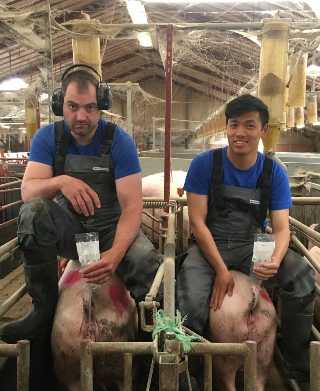 屏東科技大學學生赴丹麥受訓,豬場實習。