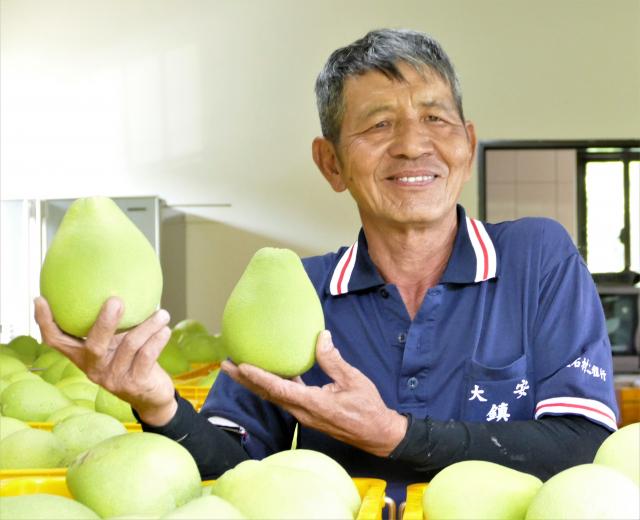 卓越農場主人洪煒德表示,文旦柚是入秋以來,第一批採收的果實,也是最早成熟的柚果。(攝影/賴瑞)