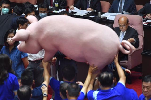 國民黨立委扛出道具豬, 抗議政府開放含萊劑美豬進口。(中央社)