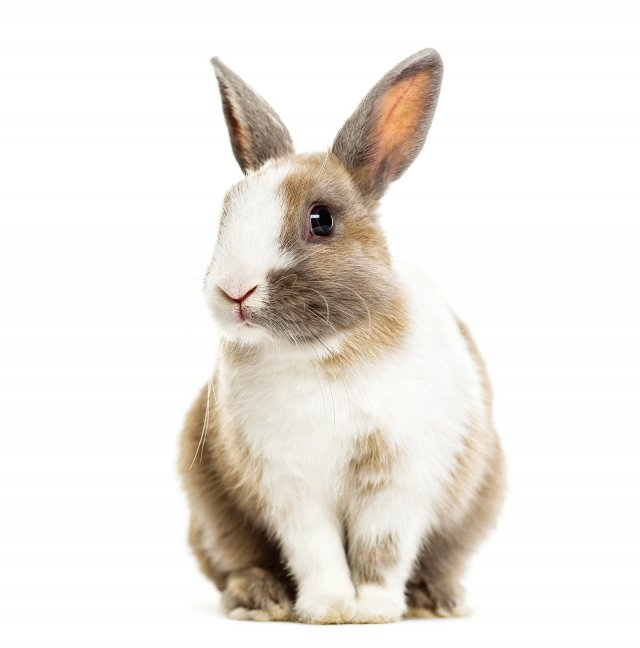 「狡兔三窟」是說狡猾的兔子有三個洞穴,用來藏身躲避災難。現在多用以比喻一個人有多處藏身的地方,或多種避禍的準備。(Fotolia)