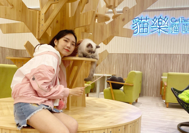 中和店引進高達 20 個新櫃,例如百貨獨家有貓咪坐鎮的「貓樂貓咖啡」。(環球購物中心提供)