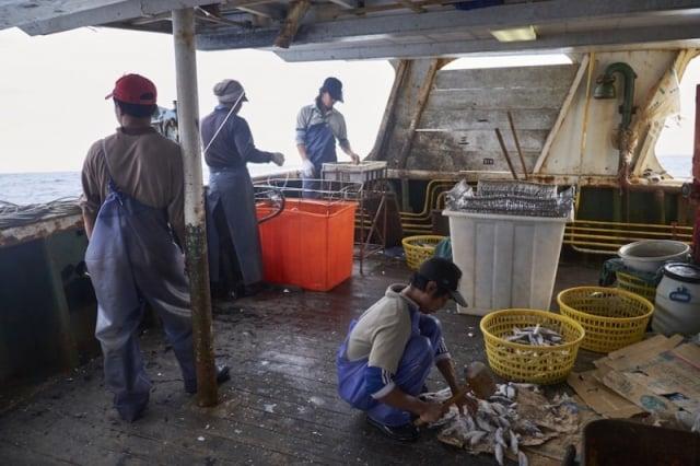 美國勞動部首次將台灣遠洋漁船所捕撈的漁獲列入「童工及強迫勞動製品清單」。(綠色和平提供)