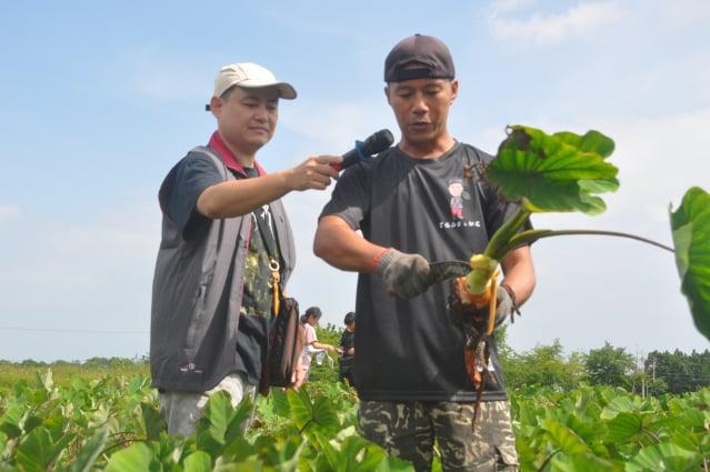 青農劉佳謙(右)目前種植5公頃芋頭,他說,自己是南華子弟,自己種植、施肥、農藥均控管安全,讓消費者買得安心、吃得安心。