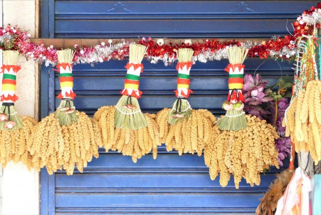 魯凱族的金黃小米束叫做「情人束」,魯凱族語就是「割愛」。(攝影/賴瑞)