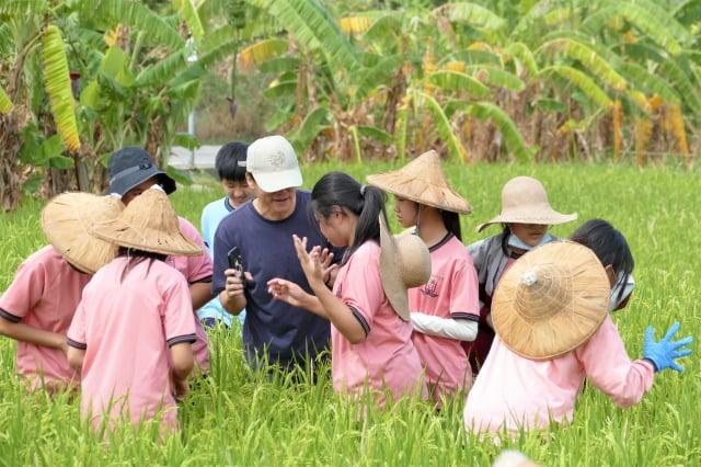 漢口國中的楊士霆老師跟著學生下到水稻田裡,觀察在水田中活動的生物。(攝影/賴瑞)