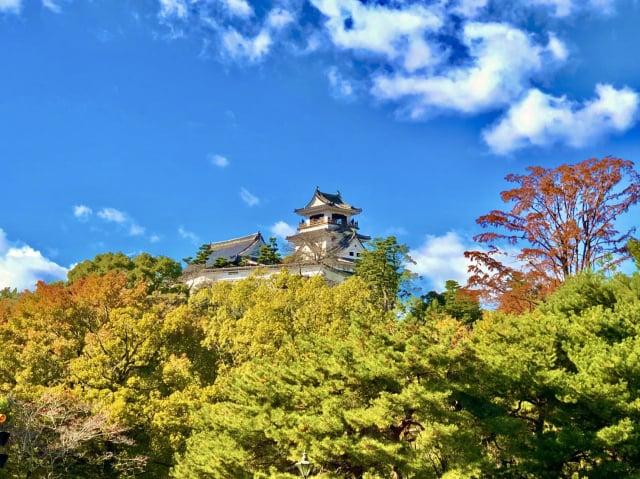 高知城春季盛開櫻花,秋季染上楓紅。(高知縣提供)
