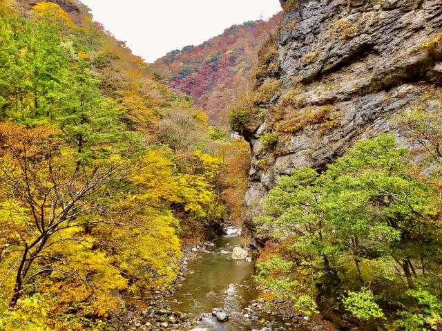 別府峽溪谷,隨季節變換山谷色彩。(高知縣提供)