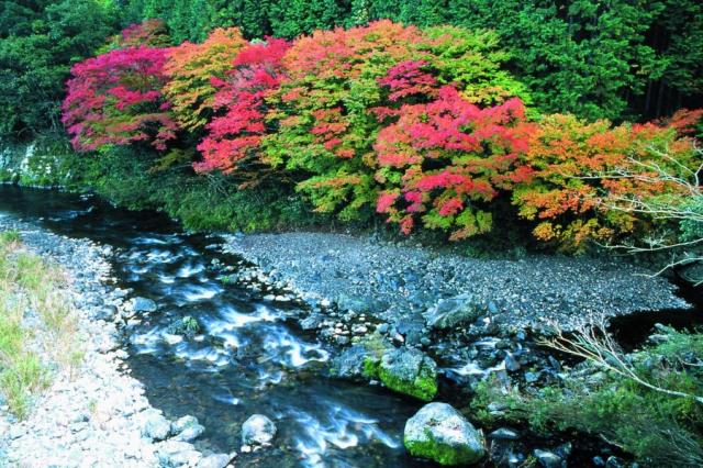 黑尊溪谷被紅黃交錯的楓葉,點綴得十分美麗。(高知縣提供)